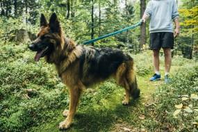 Smycz do biegania z psem JoQu JoQu Two Runners Leash