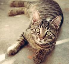 Sucha i mokra karma dla kotów